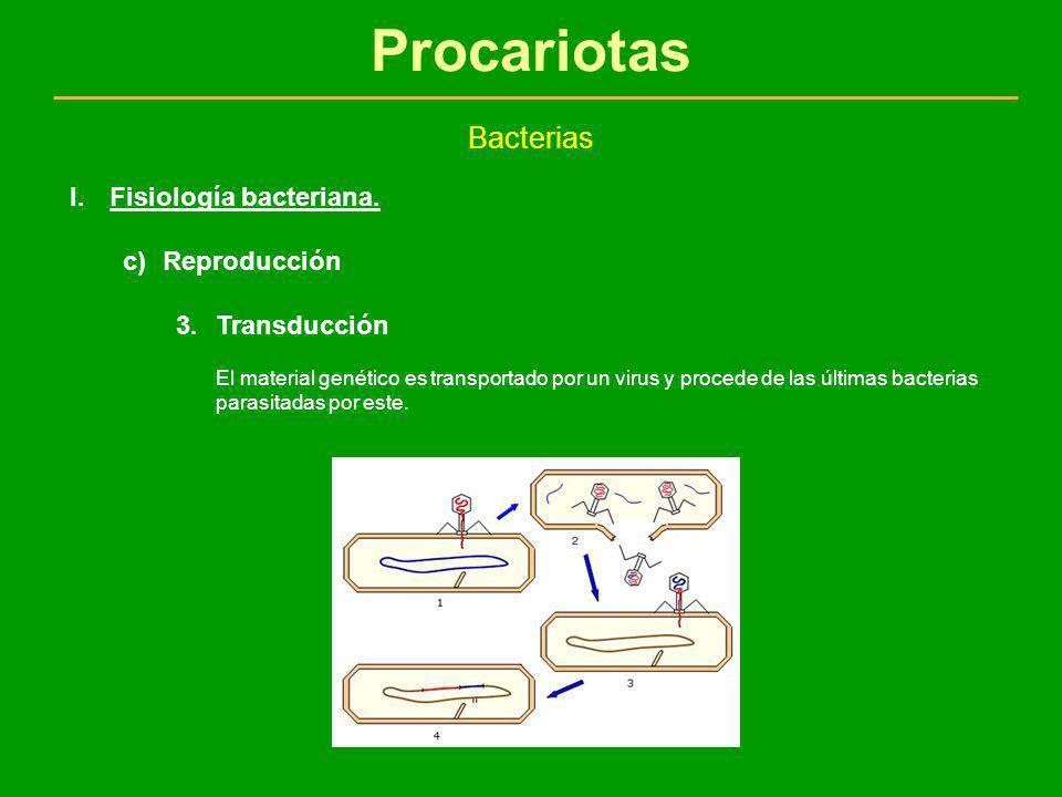 Procariotas Bacterias Fisiología bacteriana. Reproducción Transducción