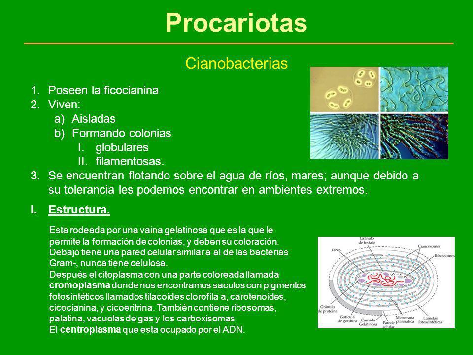 Procariotas Cianobacterias Poseen la ficocianina Viven: Aisladas