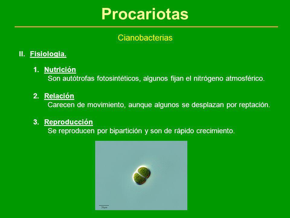 Procariotas Cianobacterias Fisiologia. Nutrición