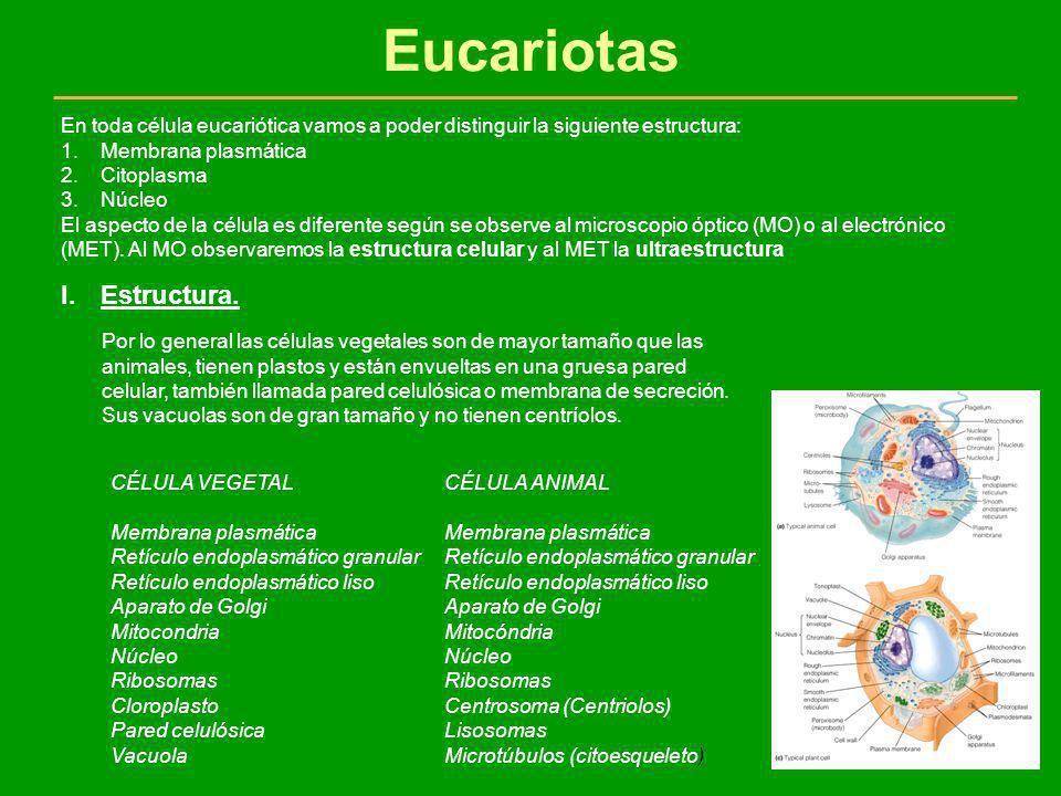 Eucariotas Estructura.