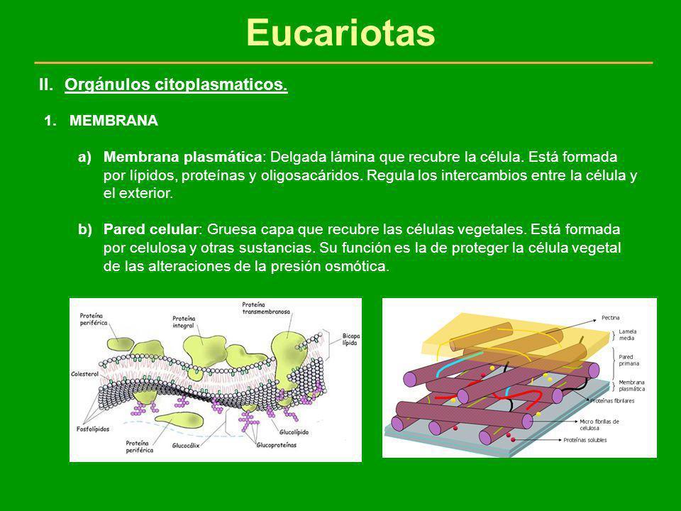 Eucariotas Orgánulos citoplasmaticos. MEMBRANA