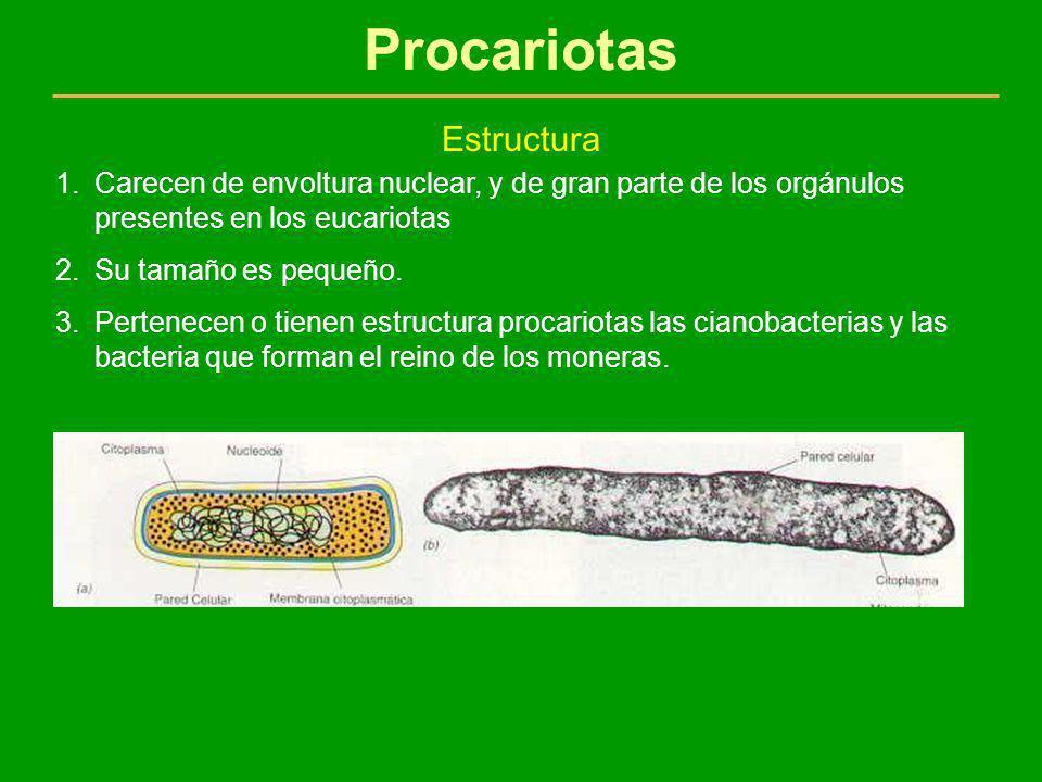 Procariotas Estructura