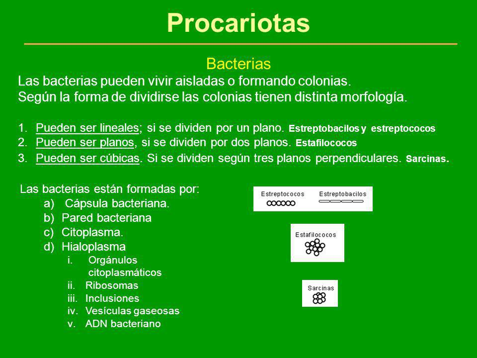 Procariotas Bacterias