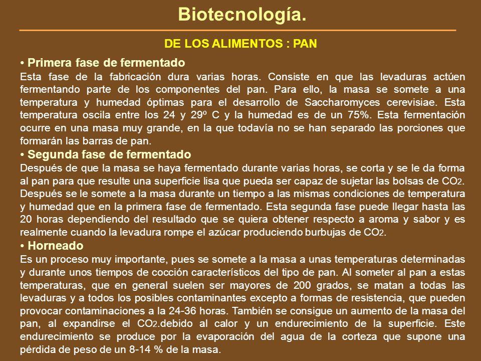 Biotecnología. DE LOS ALIMENTOS : PAN • Primera fase de fermentado