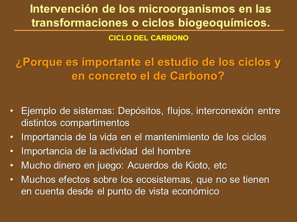 Intervención de los microorganismos en las transformaciones o ciclos biogeoquímicos.