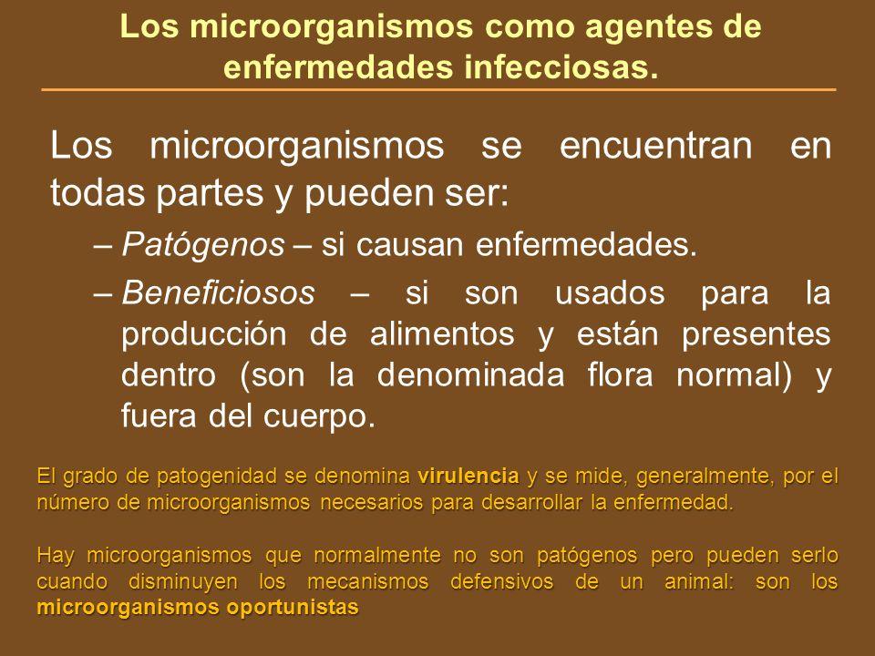 Los microorganismos como agentes de enfermedades infecciosas.