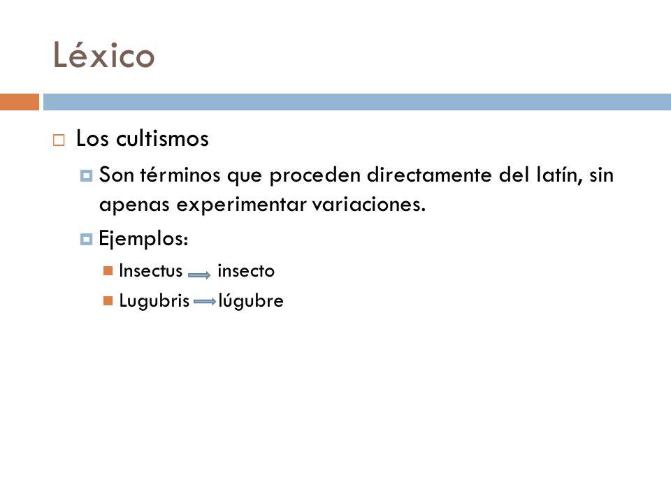 LéxicoLos cultismos. Son términos que proceden directamente del latín, sin apenas experimentar variaciones.