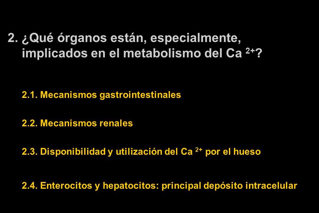 2. ¿Qué órganos están, especialmente, implicados en el metabolismo del Ca 2+