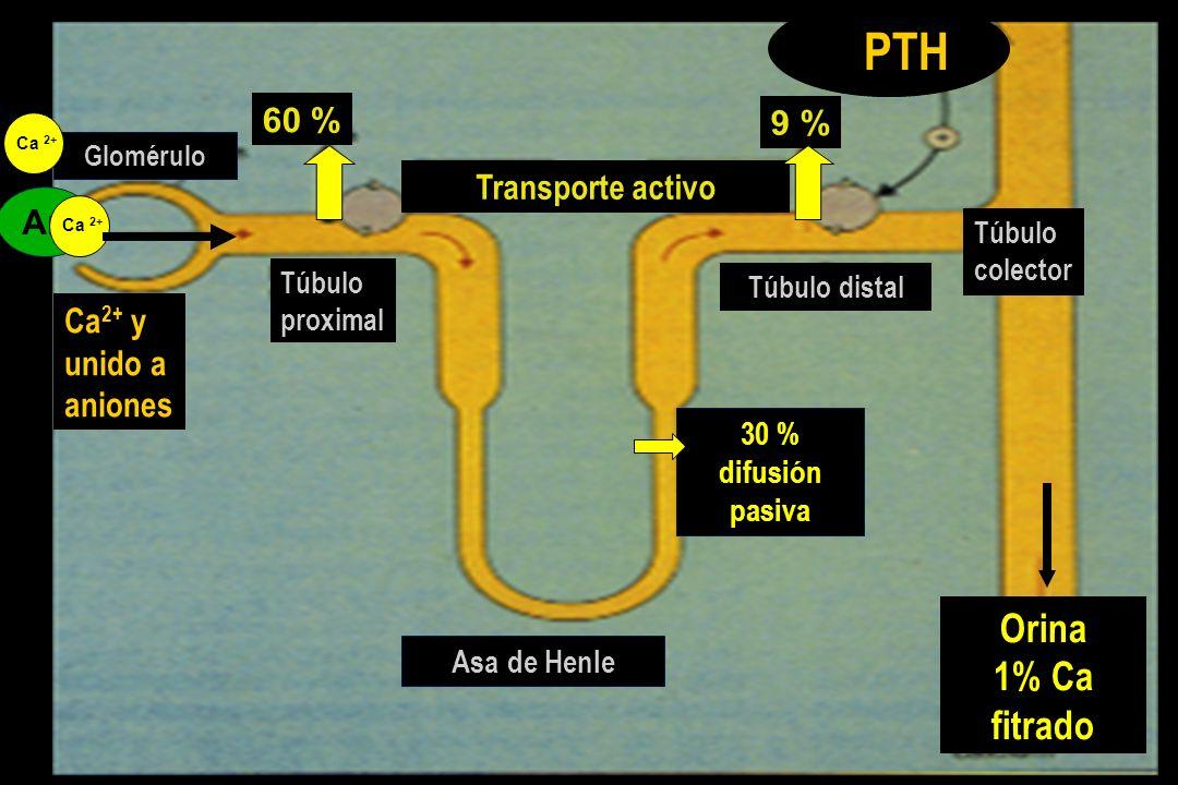 PTH Orina 1% Ca fitrado 60 % 9 % Transporte activo An