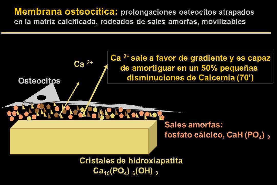 Membrana osteocítica: prolongaciones osteocitos atrapados