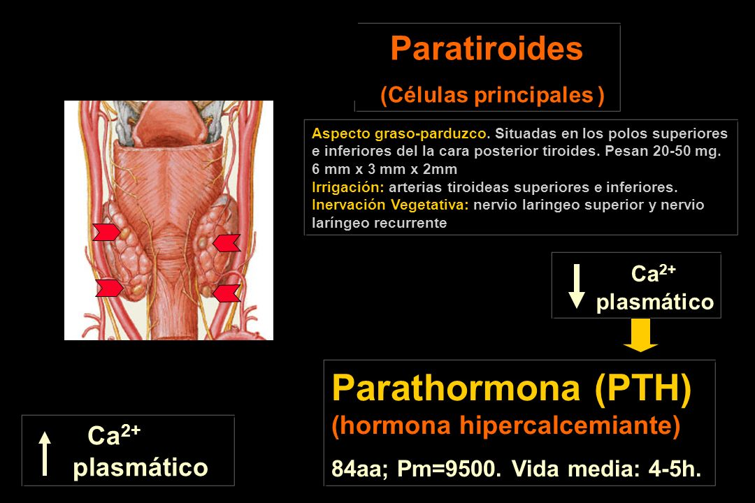 Parathormona (PTH) (hormona hipercalcemiante)