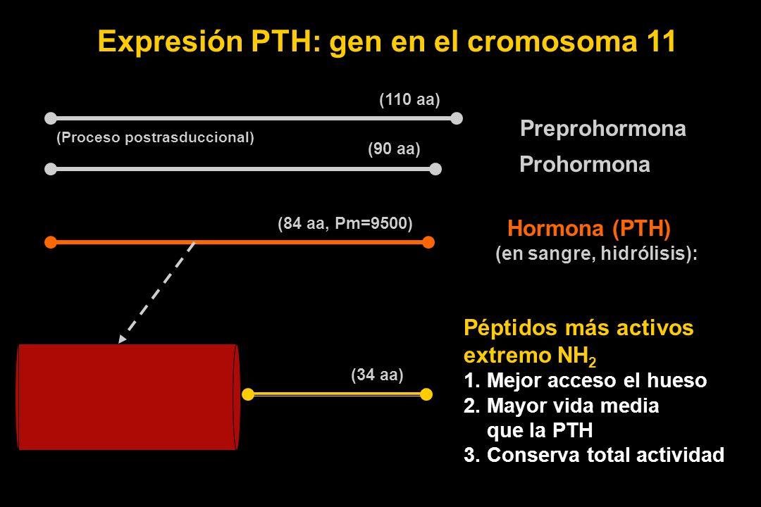 Expresión PTH: gen en el cromosoma 11