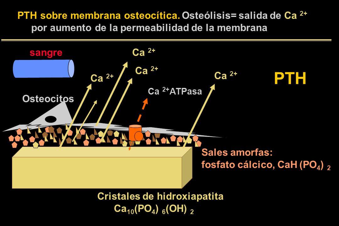 PTH PTH sobre membrana osteocítica. Osteólisis= salida de Ca 2+