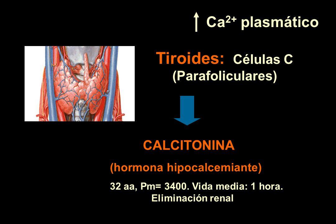 Tiroides: Células C (Parafoliculares)