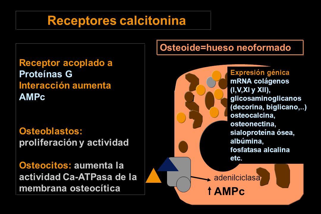 Receptores calcitonina