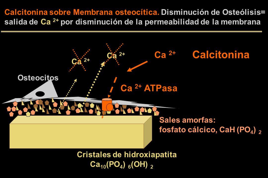 Calcitonina Ca 2+ ATPasa