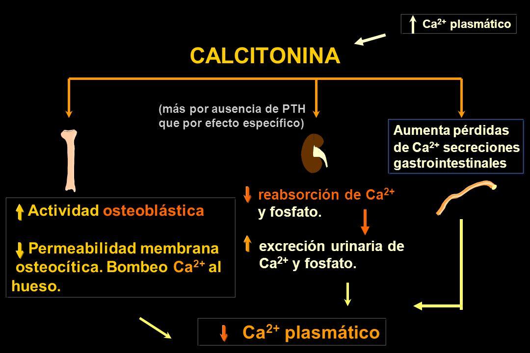 CALCITONINA Actividad osteoblástica Permeabilidad membrana