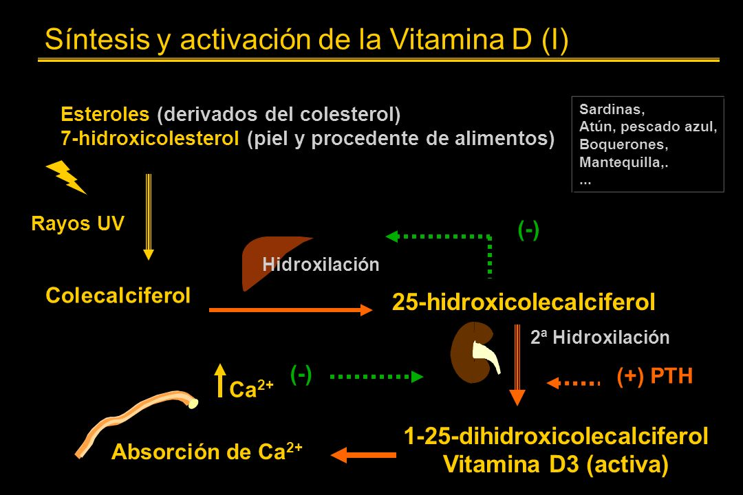 Síntesis y activación de la Vitamina D (I)
