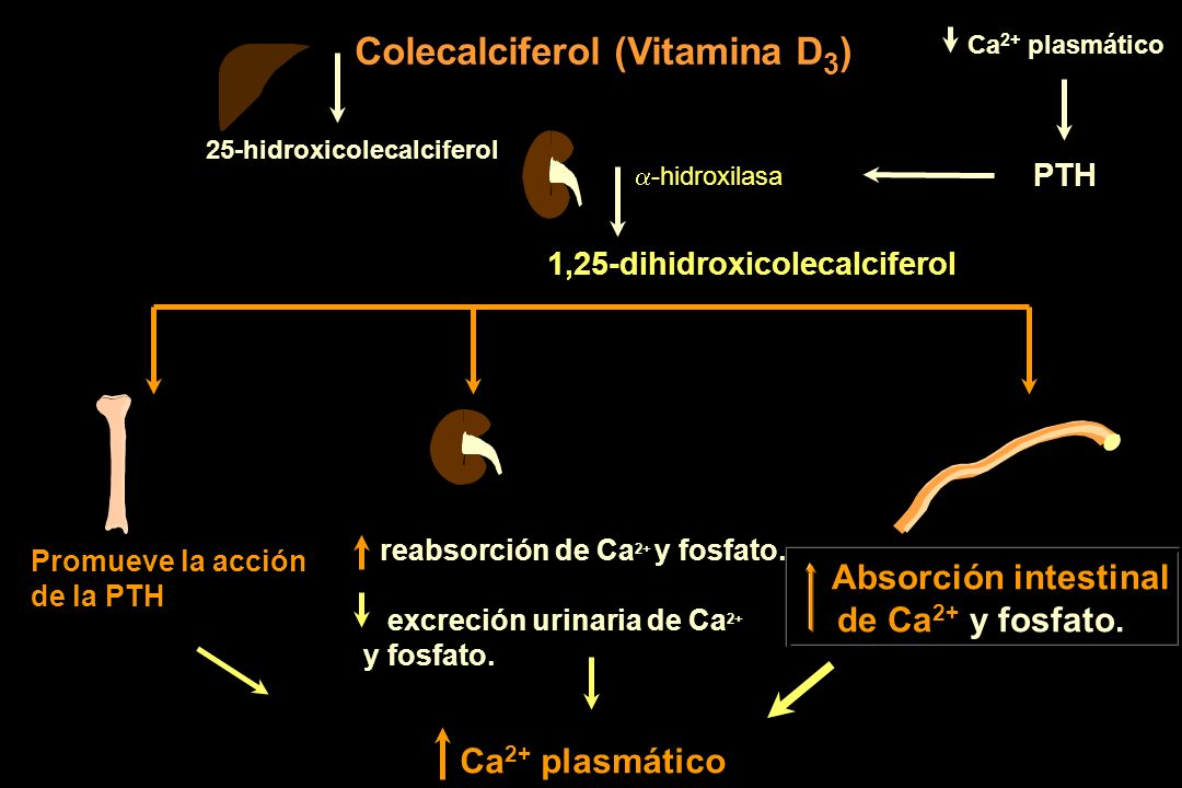 Colecalciferol (Vitamina D3)