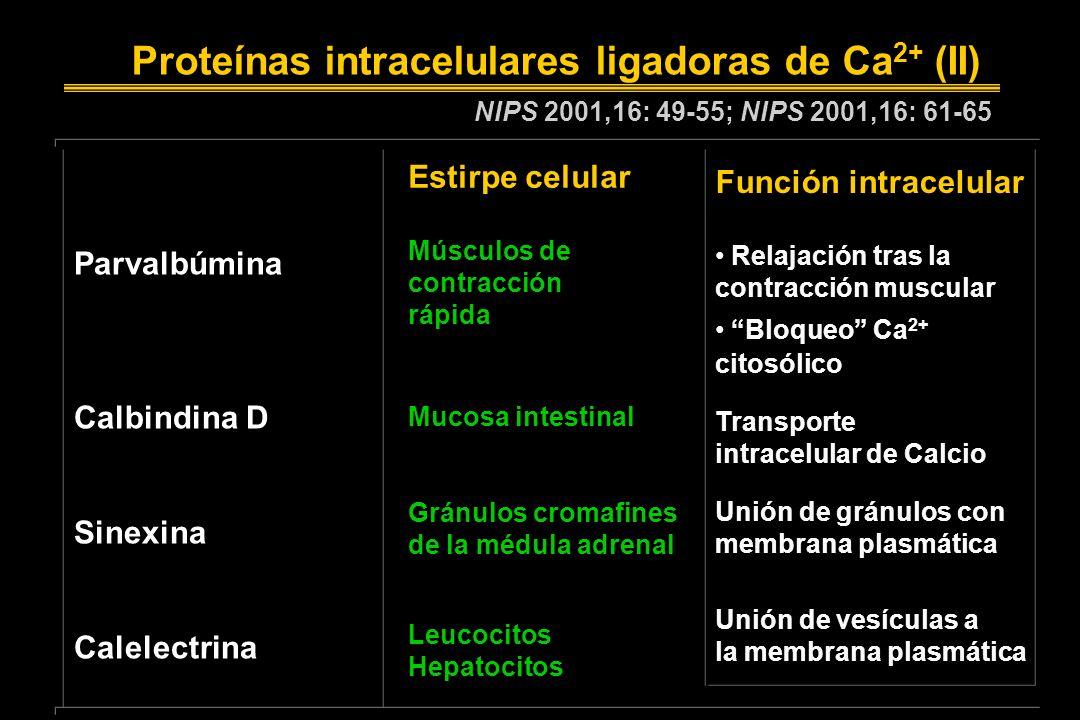 Proteínas intracelulares ligadoras de Ca2+ (II)