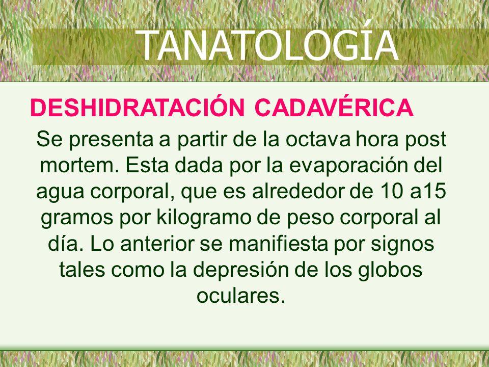 TANATOLOGÍA DESHIDRATACIÓN CADAVÉRICA