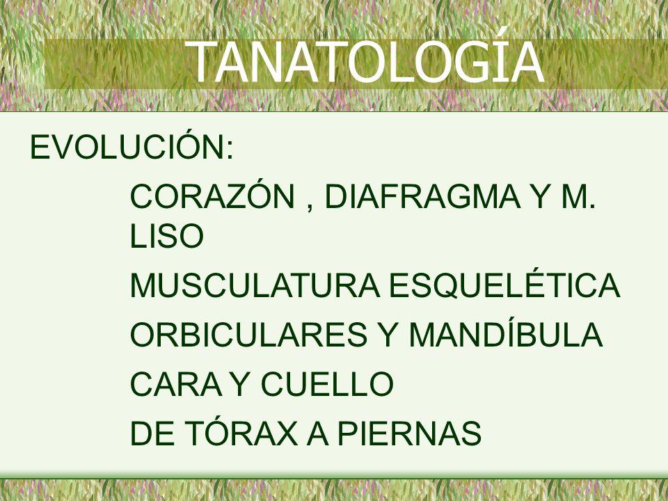 TANATOLOGÍA EVOLUCIÓN: CORAZÓN , DIAFRAGMA Y M. LISO