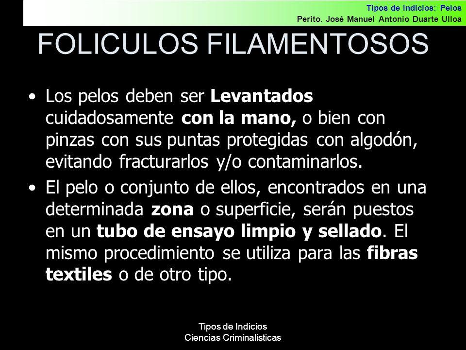 FOLICULOS FILAMENTOSOS