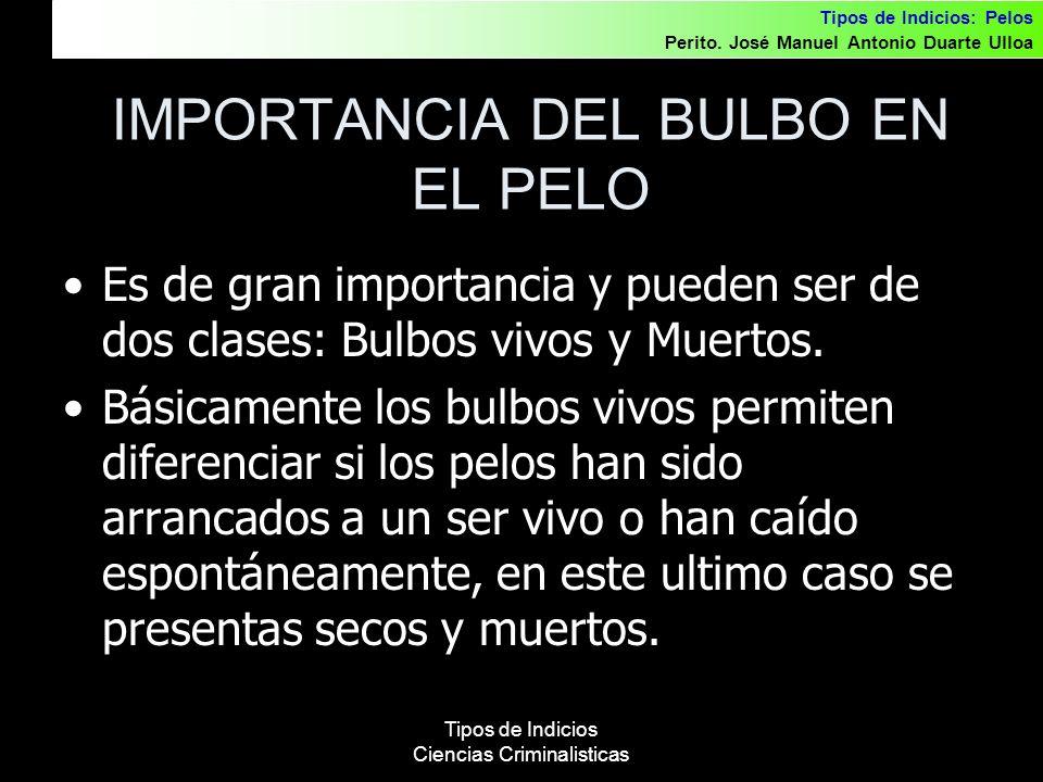 IMPORTANCIA DEL BULBO EN EL PELO