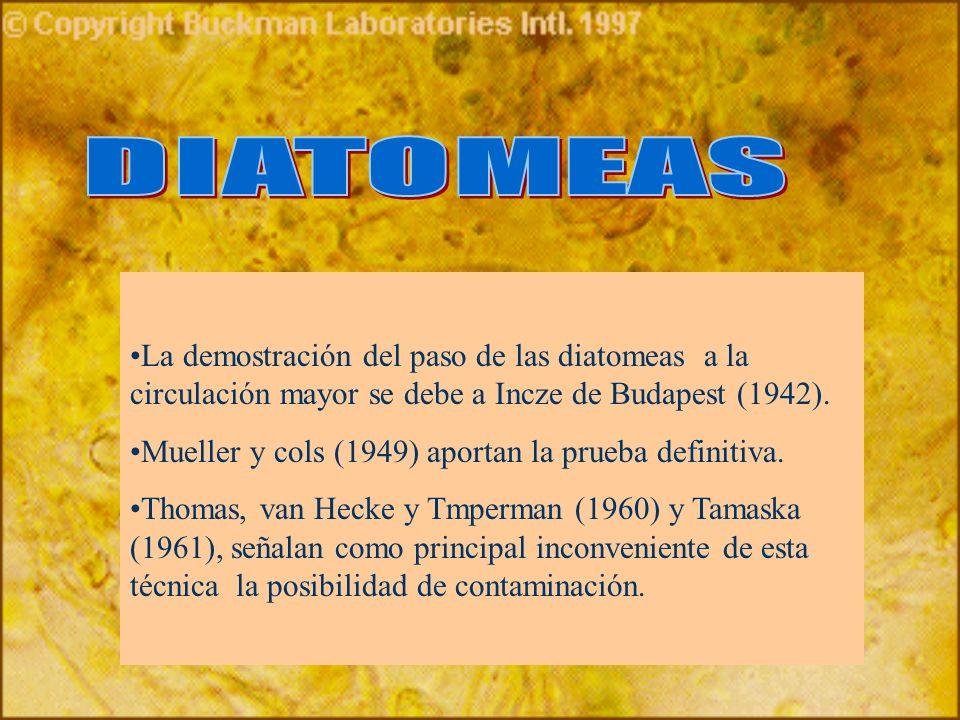 DIATOMEASLa demostración del paso de las diatomeas a la circulación mayor se debe a Incze de Budapest (1942).