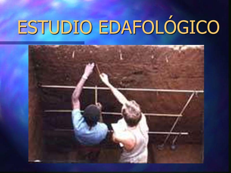ESTUDIO EDAFOLÓGICO