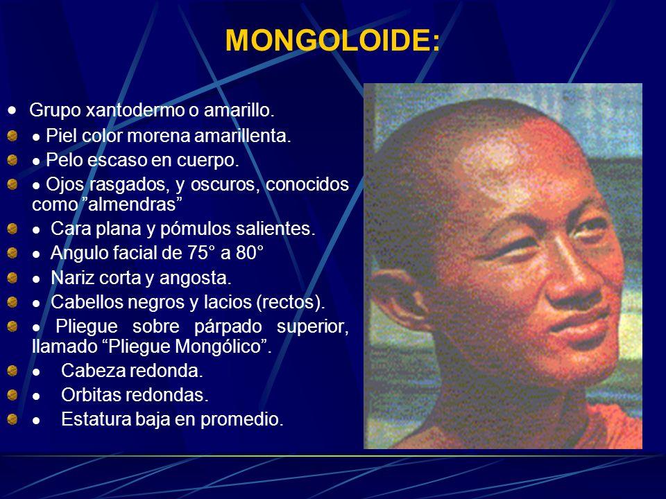 MONGOLOIDE: · Grupo xantodermo o amarillo.