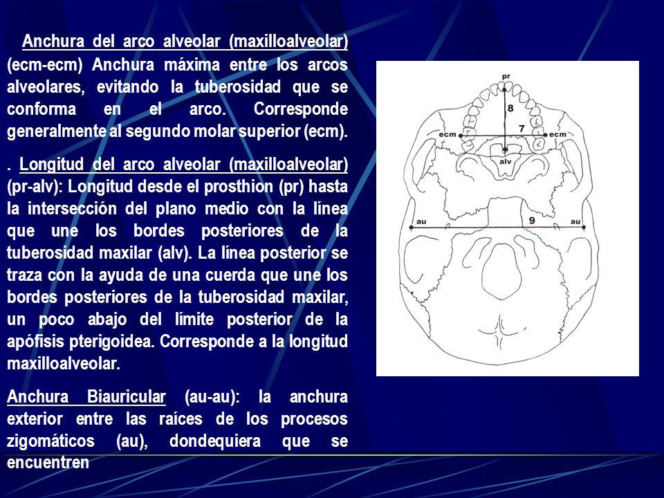 . Anchura del arco alveolar (maxilloalveolar) (ecm-ecm) Anchura máxima entre los arcos alveolares, evitando la tuberosidad que se conforma en el arco. Corresponde generalmente al segundo molar superior (ecm).