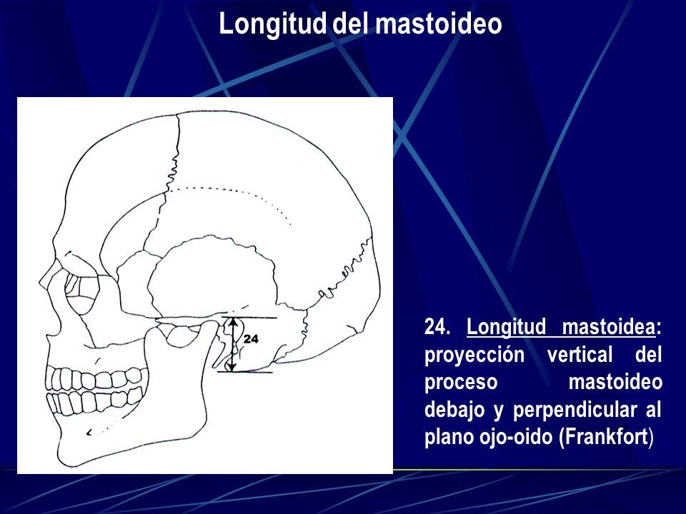 Longitud del mastoideo