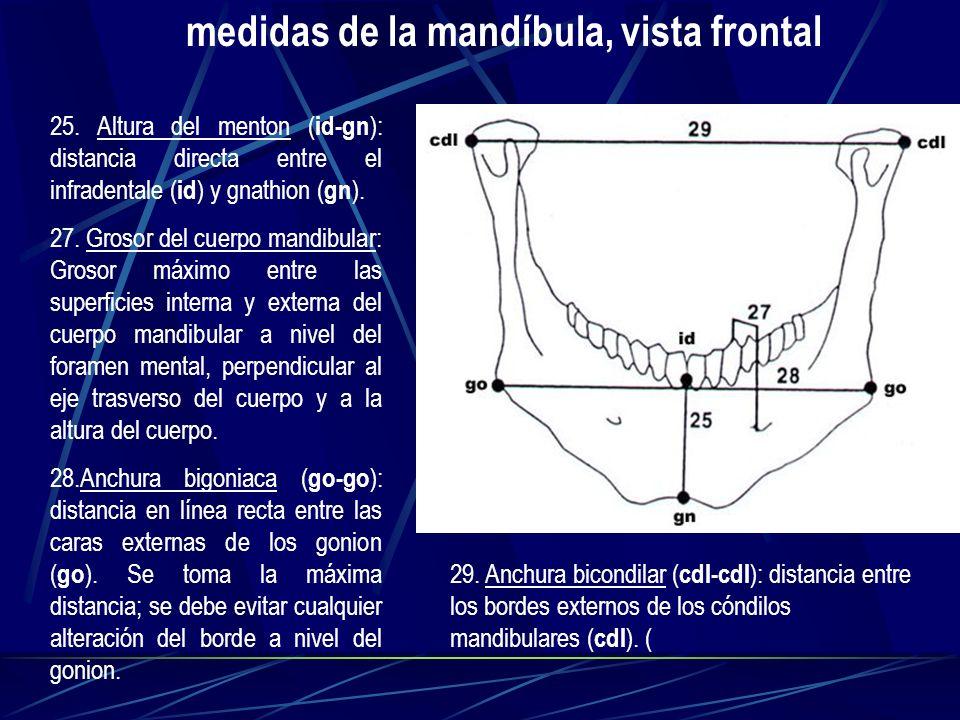 medidas de la mandíbula, vista frontal
