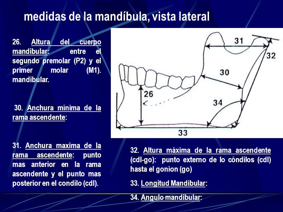 medidas de la mandíbula, vista lateral