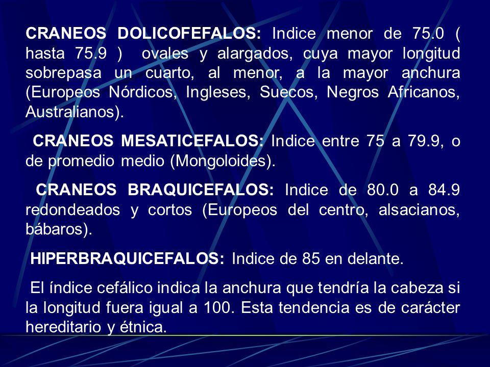 CRANEOS DOLICOFEFALOS: Indice menor de 75. 0 ( hasta 75