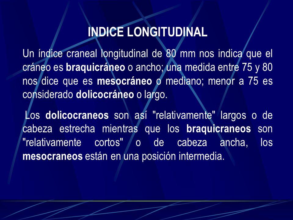INDICE LONGITUDINAL