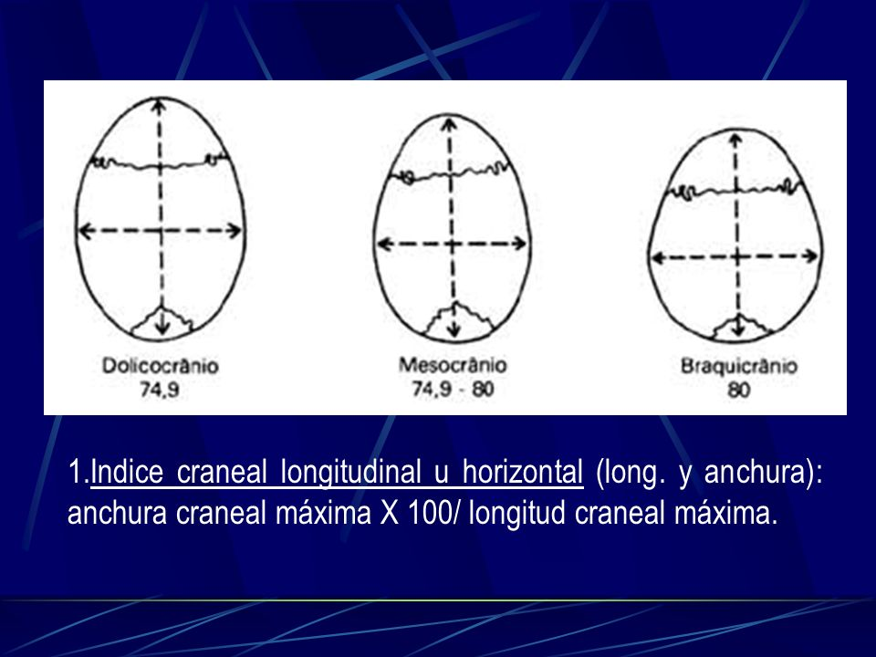 1. Indice craneal longitudinal u horizontal (long