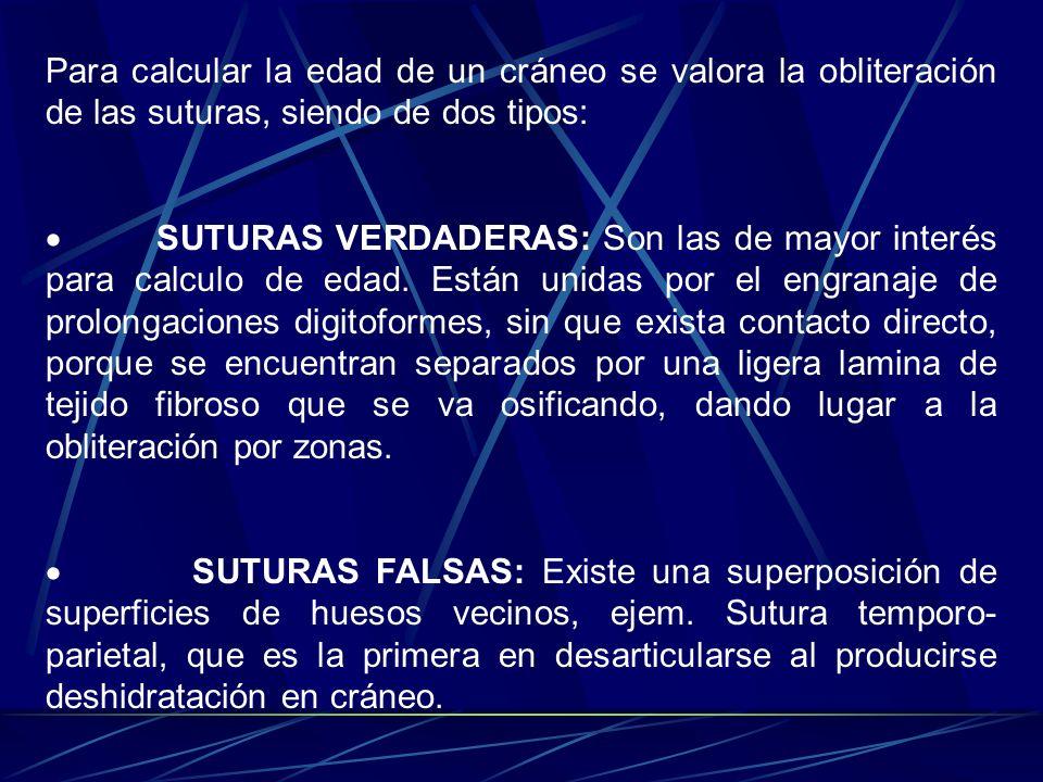 Para calcular la edad de un cráneo se valora la obliteración de las suturas, siendo de dos tipos: