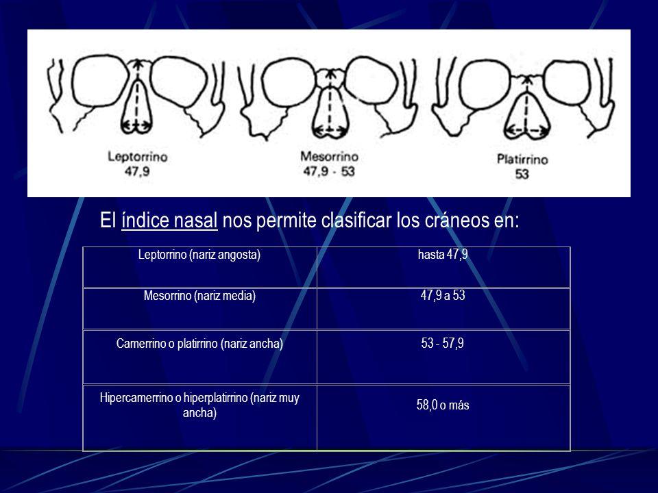 El índice nasal nos permite clasificar los cráneos en: