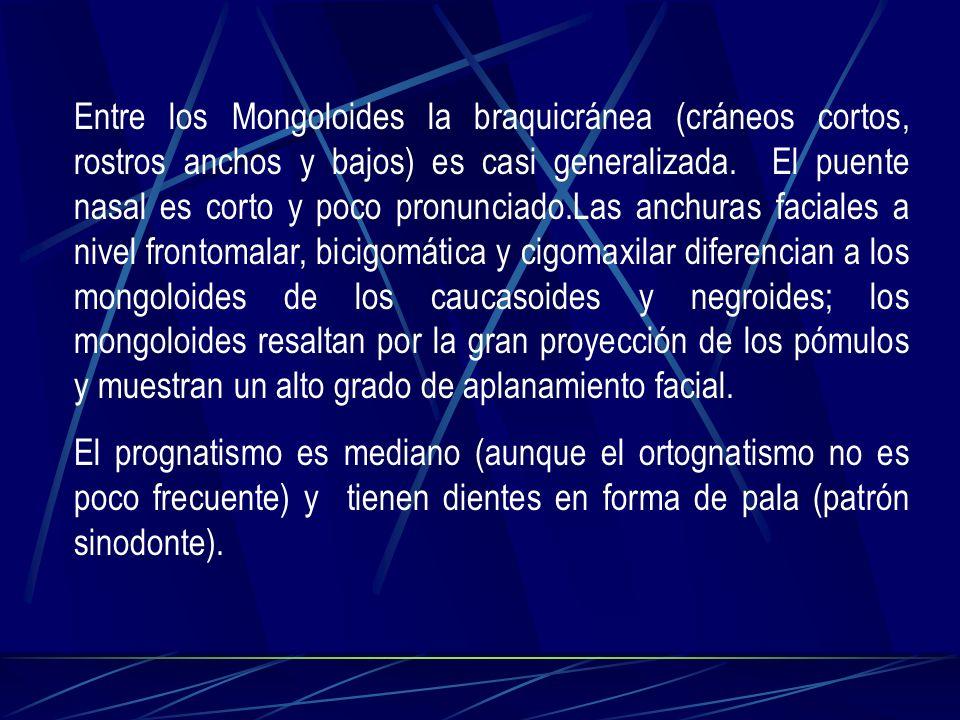 Entre los Mongoloides la braquicránea (cráneos cortos, rostros anchos y bajos) es casi generalizada. El puente nasal es corto y poco pronunciado.Las anchuras faciales a nivel frontomalar, bicigomática y cigomaxilar diferencian a los mongoloides de los caucasoides y negroides; los mongoloides resaltan por la gran proyección de los pómulos y muestran un alto grado de aplanamiento facial.