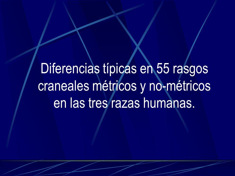 Diferencias típicas en 55 rasgos craneales métricos y no-métricos en las tres razas humanas.