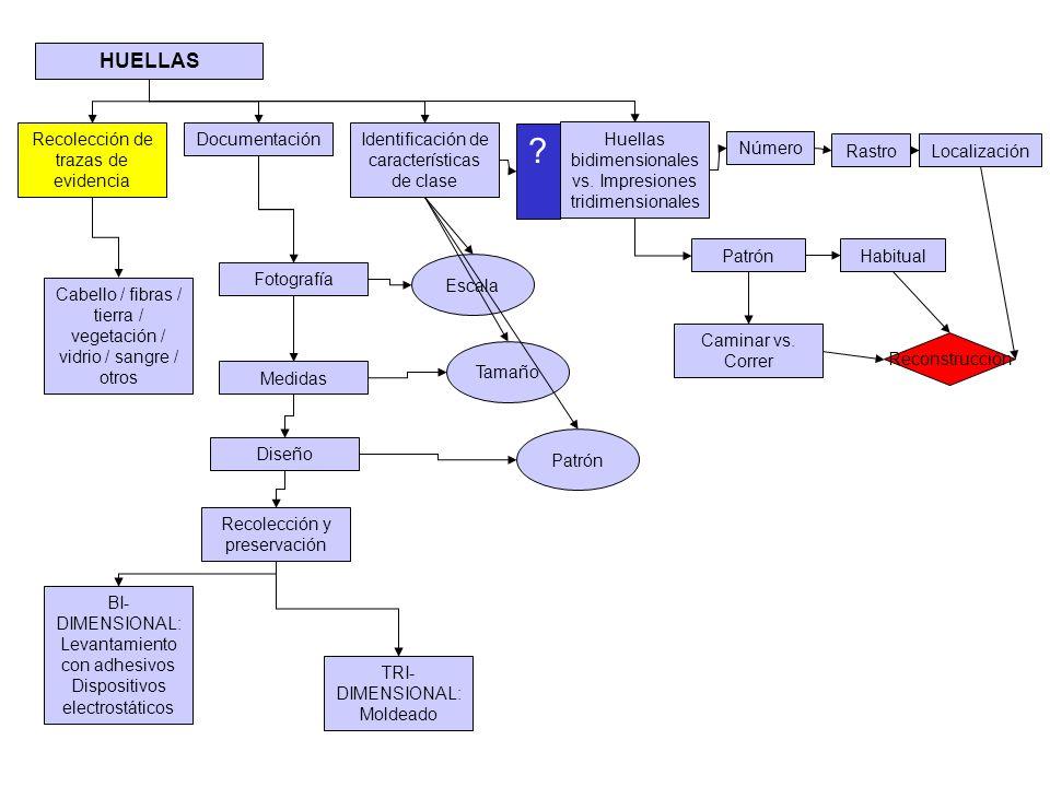 HUELLAS Recolección de trazas de evidencia Documentación