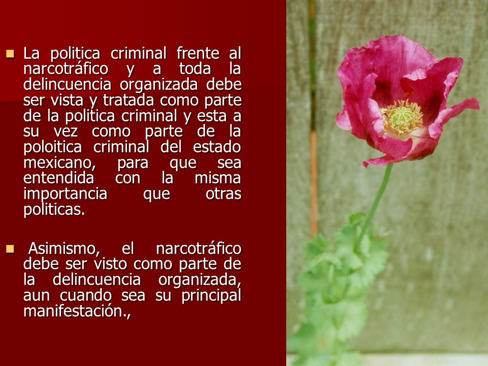 La politica criminal frente al narcotráfico y a toda la delincuencia organizada debe ser vista y tratada como parte de la politica criminal y esta a su vez como parte de la poloitica criminal del estado mexicano, para que sea entendida con la misma importancia que otras politicas.
