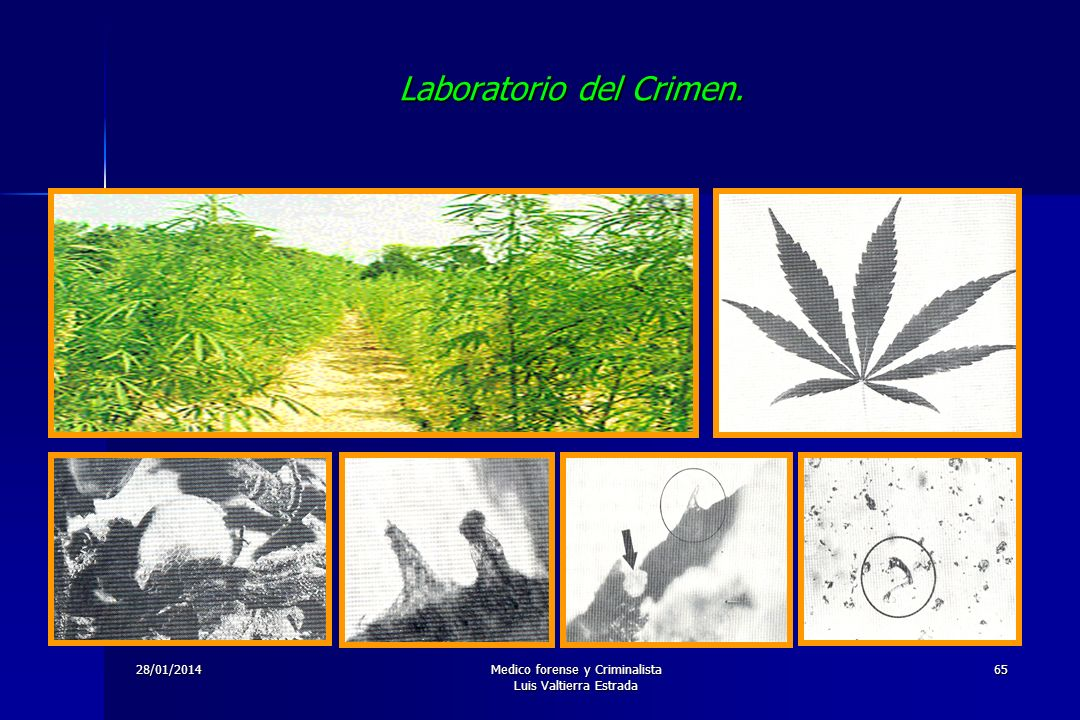 Laboratorio del Crimen.