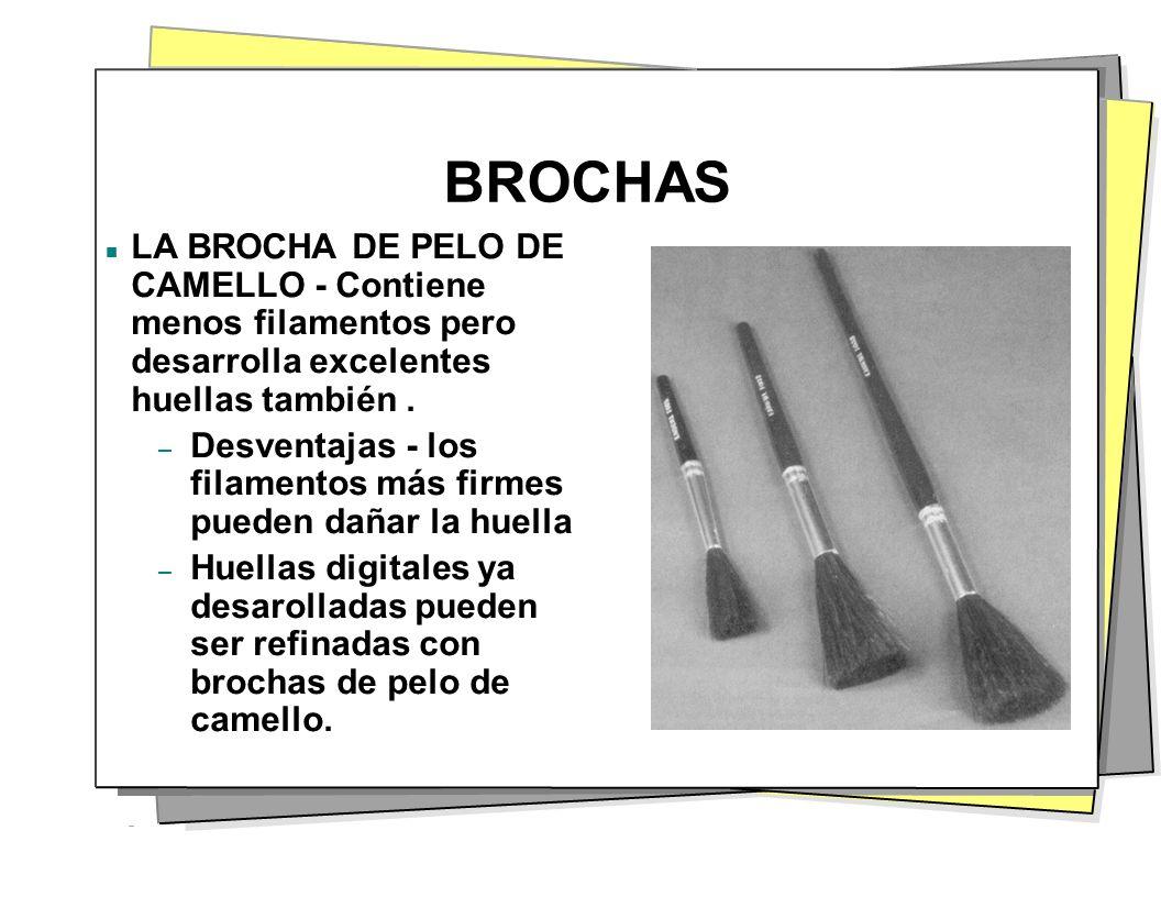 BROCHAS LA BROCHA DE PELO DE CAMELLO - Contiene menos filamentos pero desarrolla excelentes huellas también .