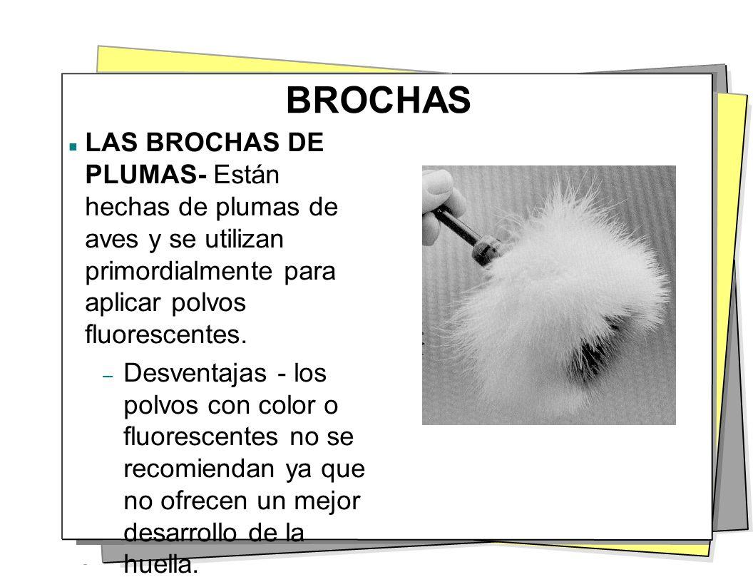 BROCHAS LAS BROCHAS DE PLUMAS- Están hechas de plumas de aves y se utilizan primordialmente para aplicar polvos fluorescentes.