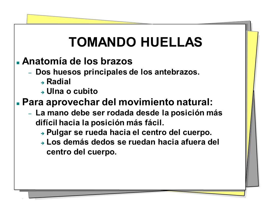 TOMANDO HUELLAS Anatomía de los brazos