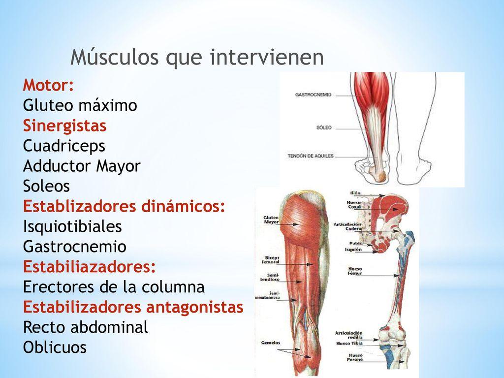 Único Diagrama De Músculo Ab Imagen - Anatomía de Las Imágenesdel ...