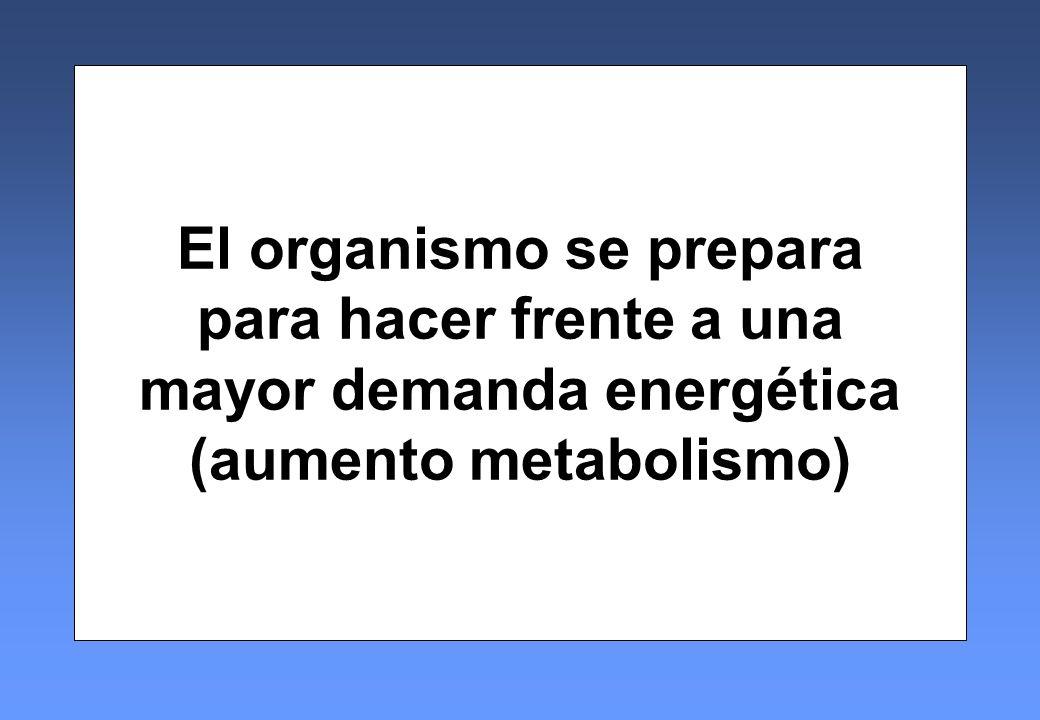El organismo se prepara mayor demanda energética (aumento metabolismo)